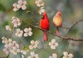 Me & Mr Cardinal