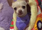 chien de chez  Pension Tatie