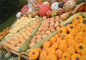 Puzzle courges