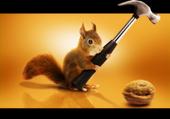 Nuts squirrel - Tobias Hellström