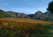 l'automne sur les vignes