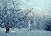 Il neige dans mon jardin 05