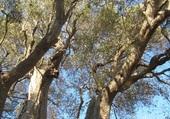 olivier millénaire roquebrune cap martin