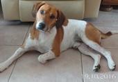 Lulu le chien