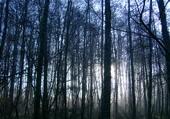 'L'arbre qui cache la forêt'
