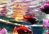 Puzzle fishs
