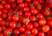 Belles tomates