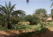 Palmeraie sud algérien