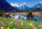 hautes montagnes fleuries