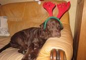 Noël...que du bonheur...