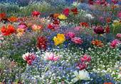 Florilège de printemps