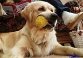 le chien et sa balle
