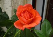 Puzzle fleur de mon jardin