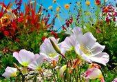 Fleurs printanière