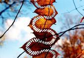 feuilles sculpté