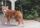 Le chat roux