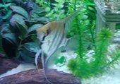 un de mes aquarium