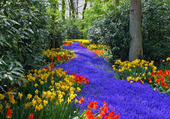 le chemin de fleurs