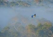 Puzzle Macaw Flight
