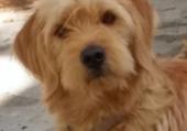 Loustic, gentil petit chien