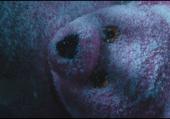 tête d'ours en peluche