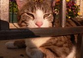 chat quiprend le soleil !