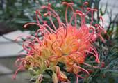 Fleur inconnue...
