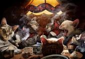 Puzzle chats qui jouent au poker