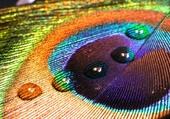 plumes colorées magnifiques