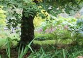 Quiétude du jardin