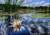 Le ciel et l'étang