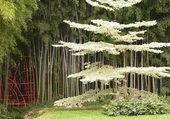 Bambouzeraie Anduze
