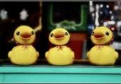 3 petits canards
