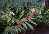 jardin en Guadeloupe
