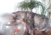 Puzzle Mimine et son compagnon le poisson !