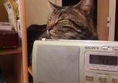 Joyce écoute la radio