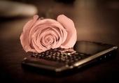 Puzzle Rose Phone