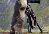 Marmot cameraman - C Clark