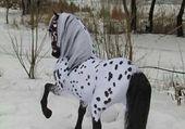 un beau cheval tacheté