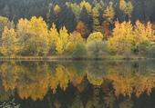 au bord de l'eau en automne