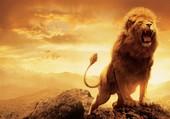 Le Roi !