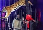 cirque et le tigre