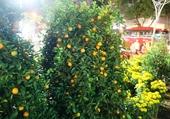 Marché aux fleurs Saigon.2