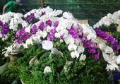 Marché aux fleurs Saigon.3