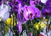 Marché aux fleurs Saigon.4