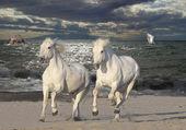 chevaux plage en soirée