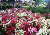Marché aux fleurs Saigon.6