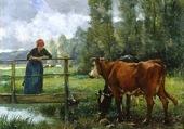 Vache buvant dans le ruisseau