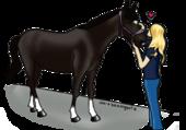 Le cheval de Lisa