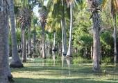 Mangrove ouest Mexicain